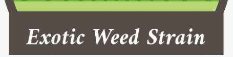 Exotic Weed Strain