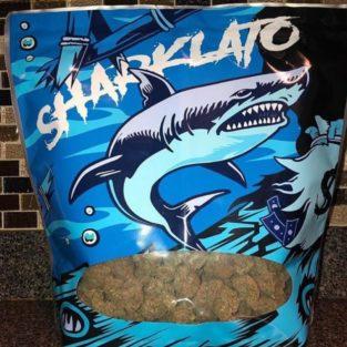 Buy Sharklato strain online